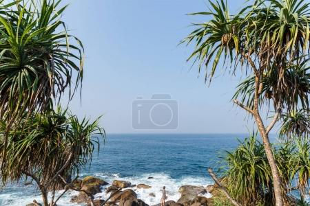 Photo for Beautiful scenic view of palm trees om coastline and blue sky, sri lanka, mirissa - Royalty Free Image