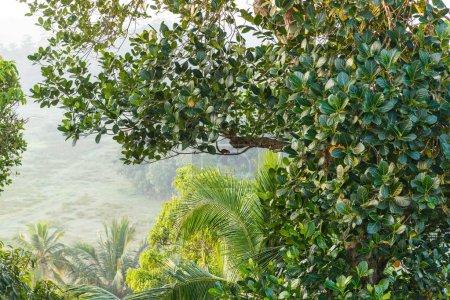 Foto de Hermosa vista panorámica de árboles con follaje verde, sri lanka, mirissa - Imagen libre de derechos