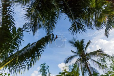 Photo for Bottom view of palm trees and cloudy blue sky, maldives, thoddoo - Royalty Free Image
