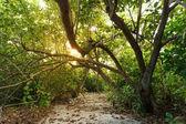 """Постер, картина, фотообои """"Солнечный свет и деревья"""""""