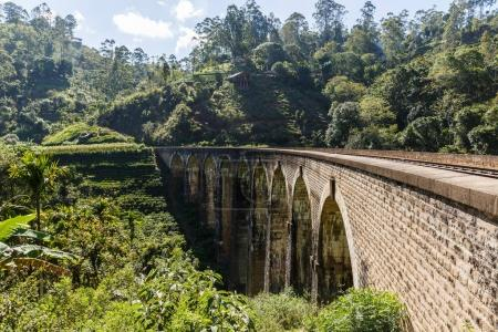Photo for ELLA, SRI LANKA - JAN 17, 2017: railway road and various trees with green foliage in Asia - Royalty Free Image