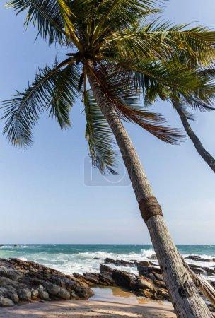 Photo pour Vue panoramique sur les vagues océaniques et les palmiers sur le littoral, sri lanka, mirissa - image libre de droit