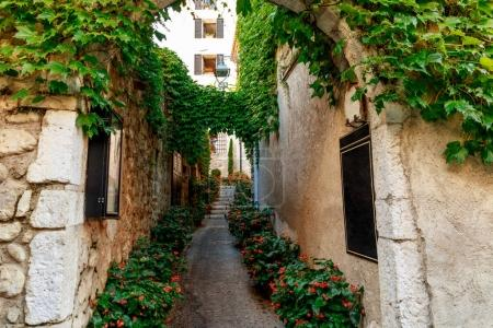 Photo for Narrow street of old european town decorated with flower bushes and vine, Antibes, France - Royalty Free Image