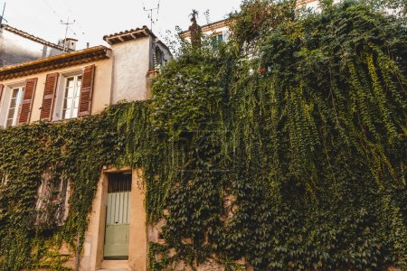 Photo for Ancient building facade covered with vine, Cannes, France - Royalty Free Image