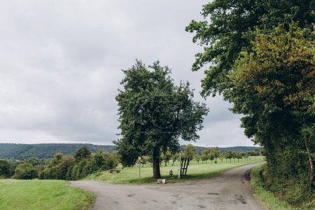 Photo for Scenic view of park with green trees in stuttgart, germany - Royalty Free Image