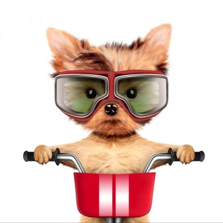 Adorable puppy sitting on a bike with helmet