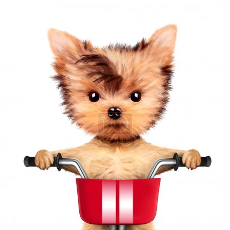 Adorable puppy sitting on a bicycle with basket