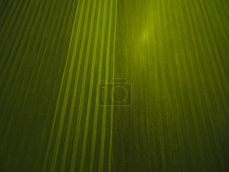 Photo for Aerial view of green field texture, Germany - Royalty Free Image