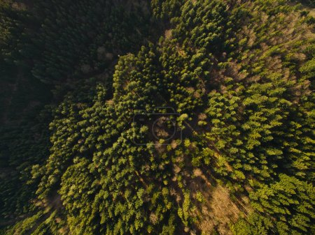 Photo for Aerial view of beautiful green woods with trees, Germany - Royalty Free Image