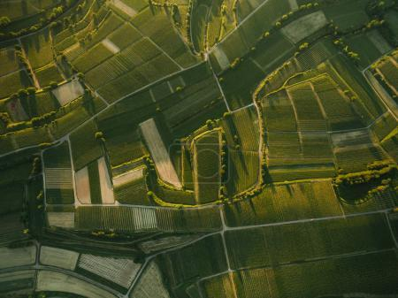 Photo for Aerial view of green agro fields in evening, europe - Royalty Free Image