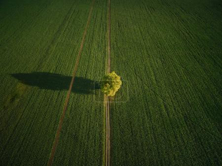 Photo for Aerial view of lonely tree in agricultural field, europe - Royalty Free Image