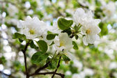 white flowers on the tree branch