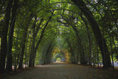 Green tunnel in the park