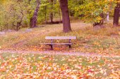 Wooden empty bench in the park. Nature in autumn colors. Park in en fall colors - green, yellow, red, orange. Blended colors of warm season.