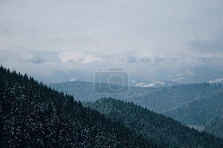 Photo pour Paysage de forêt sombre dans les montagnes de Gorgany - image libre de droit