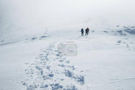 Photo for Climbers struggling winter blizzard in Gorgany mountains - Royalty Free Image