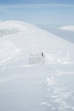 Photo for Mountaineer conquering winter snowy Gorgany mountains - Royalty Free Image