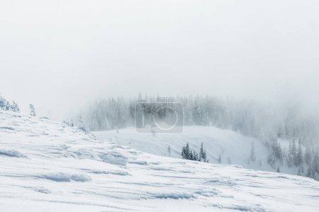 Foto de Paisaje de bosque de montañas nevadas Gorgany - Imagen libre de derechos