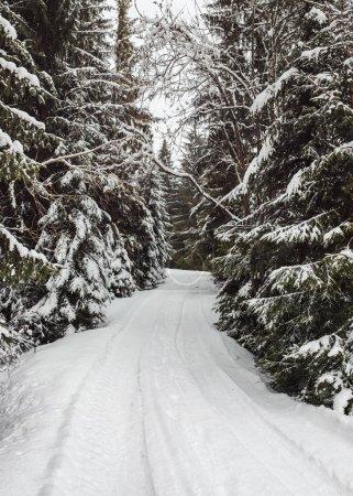 Photo pour Route forestière hiver étroit recouvert de neige avec des arbres des deux côtés. - image libre de droit