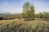 Autumn meadow. Bush. The nature of Belarus.