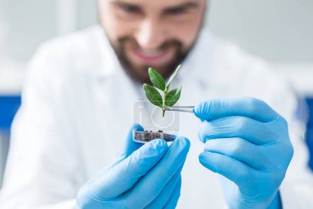 Photo for Eco engineering. Selective focus of a plant being used in the scientific lab for an eco engineering research - Royalty Free Image