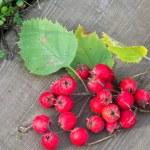 Texture, background. Hawthorn berries, how, vnitet...