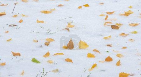 Photo pour La première neige, la fin de l'automne, les feuilles d'automne sur la neige. neige, neige, chute de neige, glissement. - image libre de droit