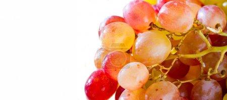 Photo pour Les raisins peuvent être consommés frais comme raisins de table ou ils peuvent être utilisés pour faire du vin, de la confiture, du jus, de la gelée, de l'extrait de pépins de raisin, des raisins secs, du vinaigre et de l'huile de pépins de raisin. Le raisin est un type de fruit non climactérique. - image libre de droit