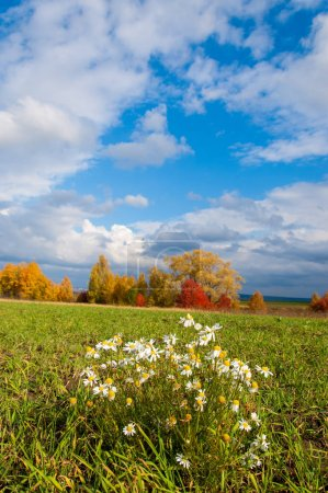 A wonderful time to fall, golden leaves, warm days...