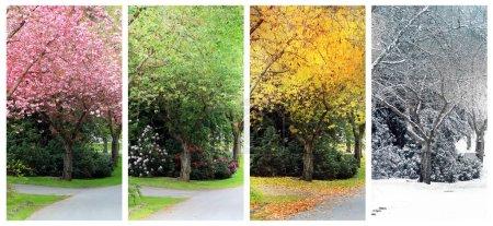 Photo pour Printemps, été, automne et hiver. Quatre saisons photographiées dans la même rue au même endroit. Neige tombante visible dans l'image d'hiver . - image libre de droit