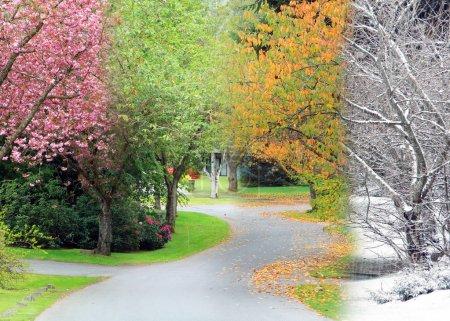 Photo pour Une rue bordée de cerisiers ornementaux, photographiée pendant les quatre saisons et fusionnée en une seule image. Egalement disponible en images individuelles. Printemps, été, automne, hiver . - image libre de droit