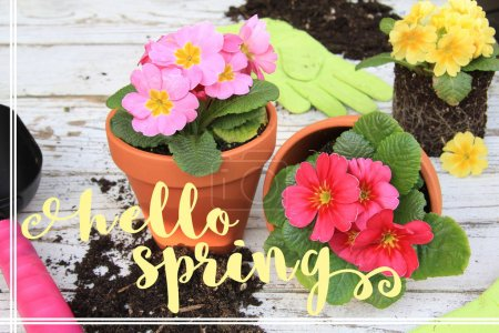 Photo pour Bonjour message de printemps sur un fond de fleurs Primula et outils de jardinage . - image libre de droit