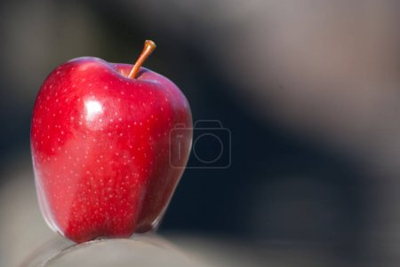 One red apple on wooden fence