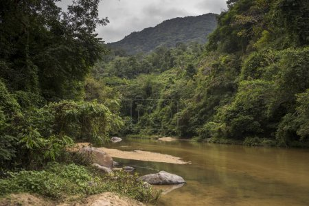 Scenic view of river flowing in forest, Yelapa, Jalisco, Mexico
