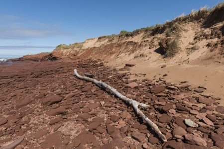 Photo for Driftwood and rock formations on beach, Green Gables, Cavendish, Prince Edward Island National Park, Prince Edward Island, Canada - Royalty Free Image