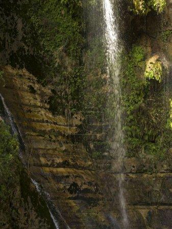 Water falling from rock, David Waterfall, En Gedi Nature Reserve, Judean Desert, Dead Sea Region, Israel