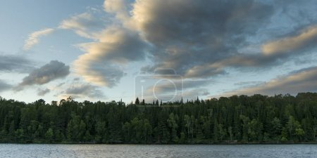Blick auf Bäume am Seeufer, Waldsee, Ontario, Kanada