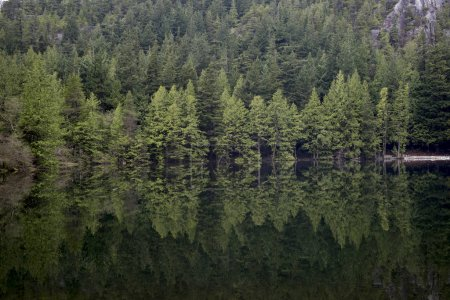 Reflection of trees in a lake, West Vancouver, British Columbia, Canada