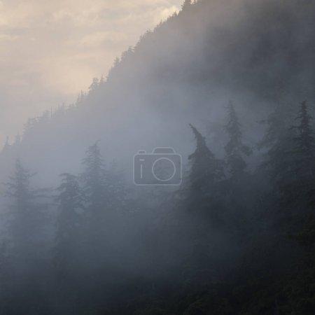Photo pour Foggy forest, district régional de Skeena-Queen Charlotte, Haida Gwaii, île Graham, Colombie-Britannique, Canada - image libre de droit
