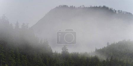 Photo pour Brouillard sur les arbres, district régional de Skeena-Queen Charlotte, Haida Gwaii, île Graham, Colombie-Britannique, Canada - image libre de droit