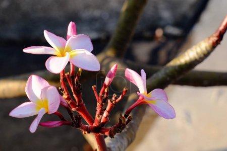 Photo pour Fleurs roses avec feuilles vertes - image libre de droit