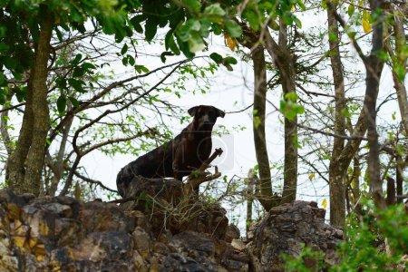 Foto de Perro de pie en roca en el bosque - Imagen libre de derechos