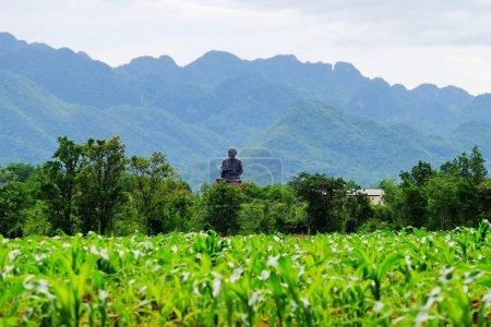 Photo pour Champ vert et montagnes le jour ensoleillé lumineux - image libre de droit