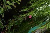 """Постер, картина, фотообои """"Зеленые листья с розовым цветком"""""""