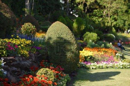Photo pour Vue de fleurs colorées poussant dans le parc pendant la journée - image libre de droit