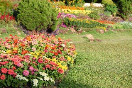 Photo pour Vue de fleurs colorées poussant dans le jardin - image libre de droit
