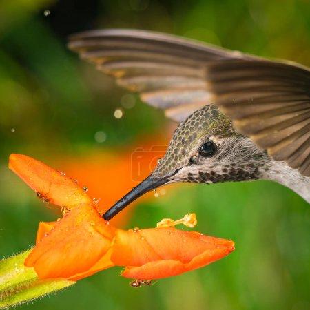 Photo pour Une photographie de la tête d'un colibri et des deux fourmis - image libre de droit