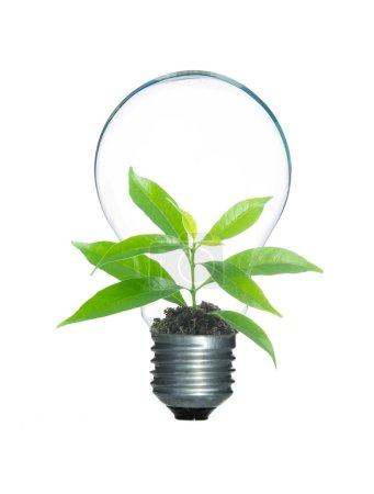 Photo pour Germe d'arbre à l'intérieur lampe ampoule isoler sur fond blanc - image libre de droit