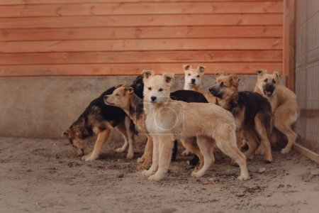 Group of puppies in a shelter waiting for adoption...