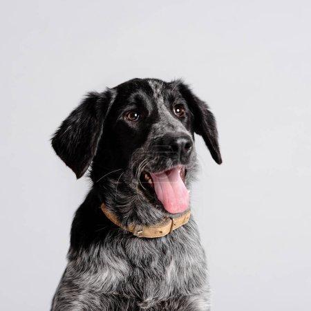 Photo pour Heureux portrait de chien de race mixte dans un collier, gros plan - image libre de droit